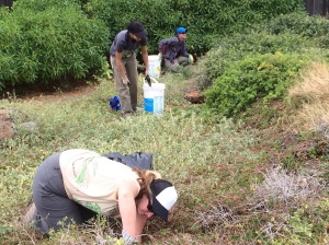 Volunteers at the Freeman Seabird Preserve readying nests to welcome back the wedge-tailed shearwaters